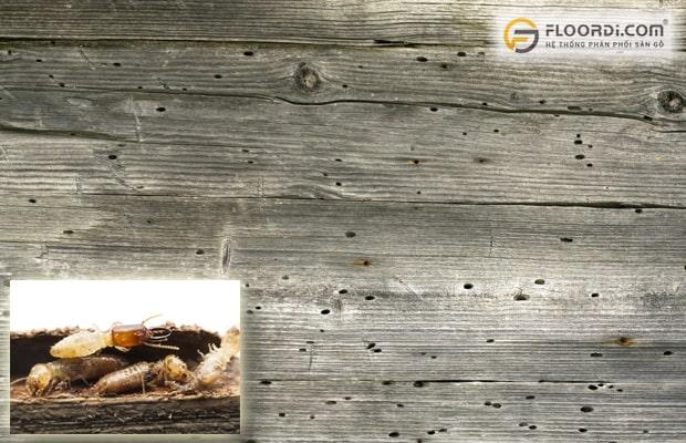 Sàn gỗ xuất hiện các lỗ nhỏ li ti